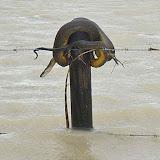 Les inondations au Queensland : python