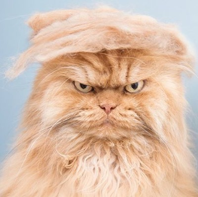 082415-trump-your-cat-2
