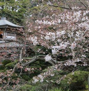 150328_teratsudo_008.jpg