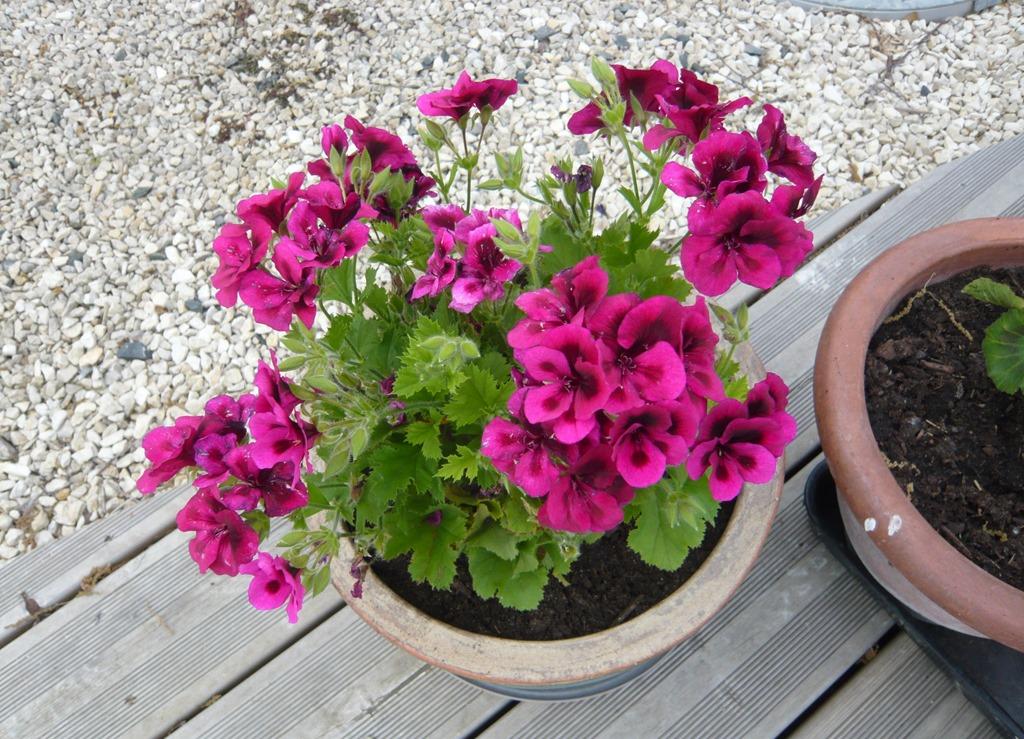 [Spring+flowers9u%5B3%5D]