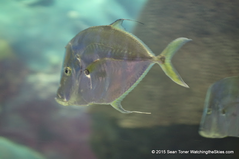 02-08-15 Corpus Christi Aquarium and USS Lexington - _IMG0510.JPG