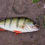 20160624_Fishing_Bakota_172.jpg