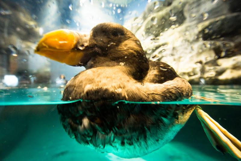 アクアワールド大洗水族館 写真15