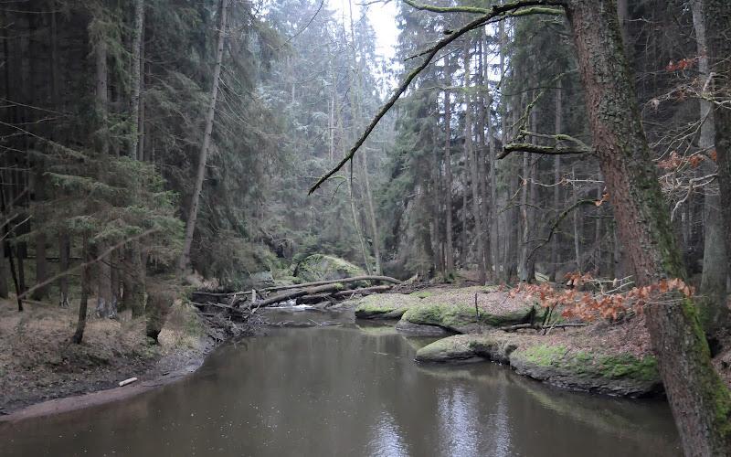 20140101 Neujahrsspaziergang im Waldnaabtal - DSC_9839.JPG