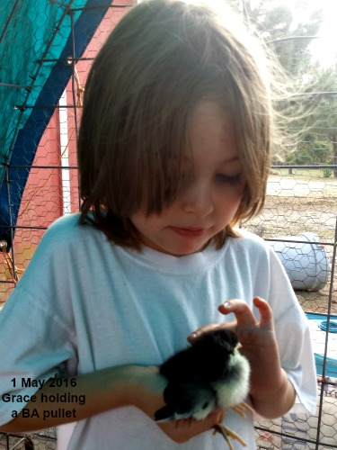 Grace holding a May Day chick at LP Painted Ponys