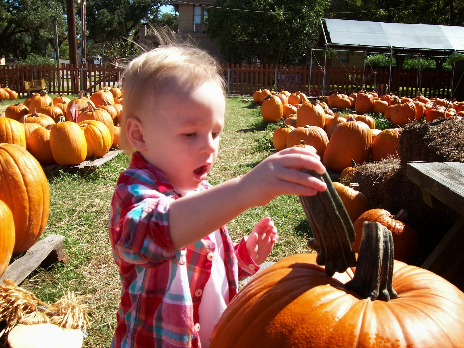 Pumpkin Patch - 114_6545.JPG