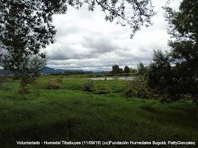 Voluntariado - Humedal Tibabuyes (11/09/16) (cc)Fundación Humedales Bogotá; PattyGonzalez