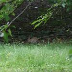 Parc Départemental de la Courneuve Georges Valbon : lapin
