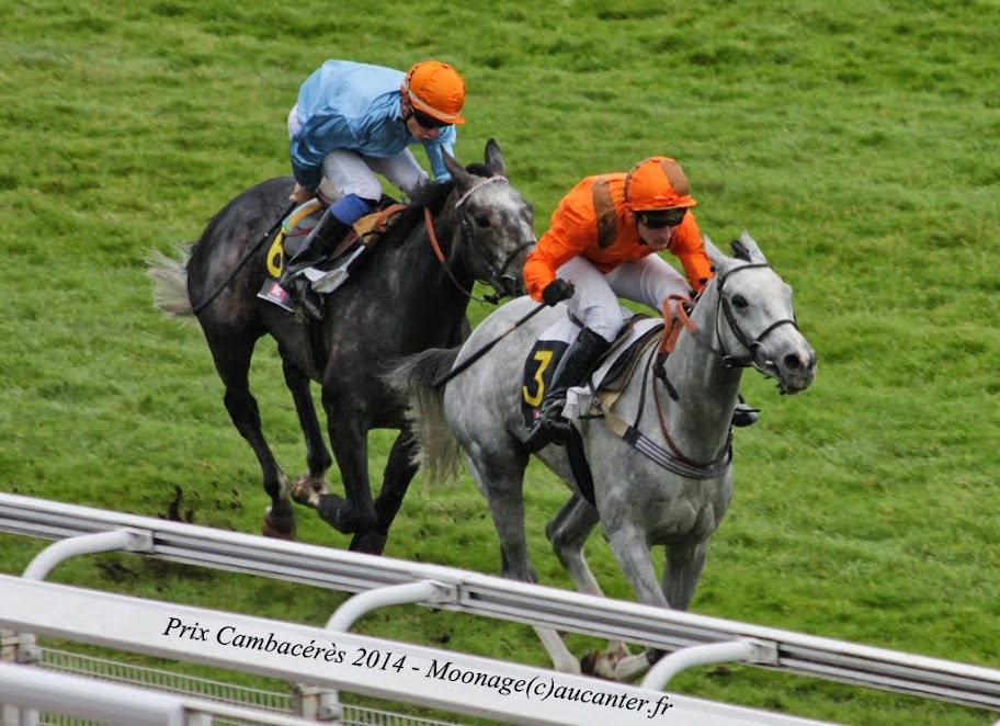 Photos Auteuil 2-11-2014 (48h de l'obstacle) IMG_5377