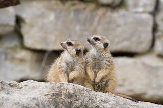 Opel-Zoo / Зоопарк Опеля