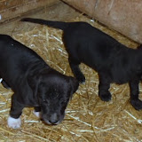 Gretta & Cobalt Blues 3/24/12 litter - SAM_3427.JPG