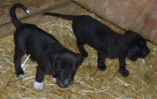 Gretta & Cobalt Blues 3/24/12 litter - SAM_3427.JPG
