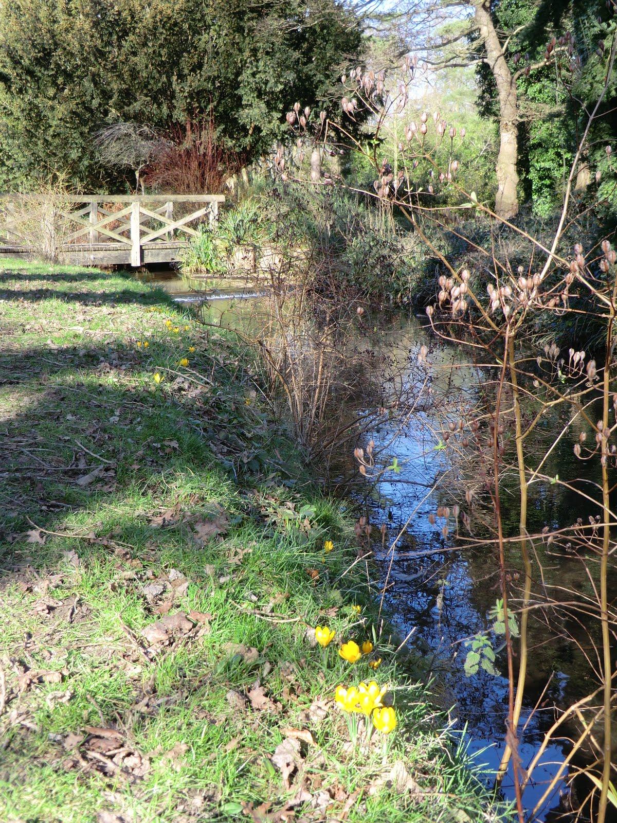 CIMG6732 Stream through the Waterhouse Plantation