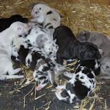 Graysee & Jasper's babies @ 4 days