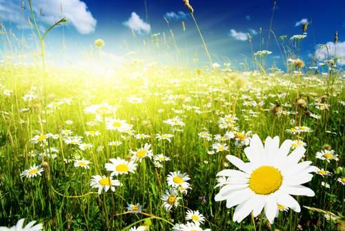 Diệt cỏ lùng bằng nhân đức