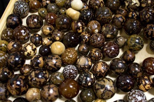 seabean-fest-sea-coconuts-polished