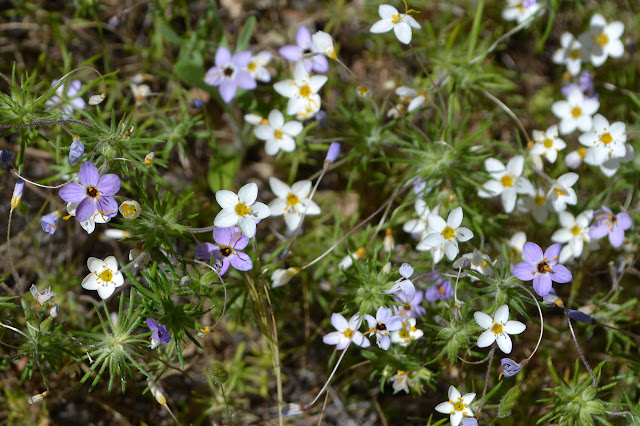 small section of a field of small flowers
