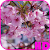 Cherry Blossom Video Wallpaper file APK Free for PC, smart TV Download