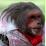 ian birchak's profile photo