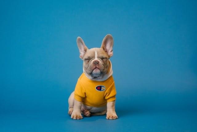 Yavru Köpek İsimleri (Yabancı)- Basit bir görevden daha fazlası