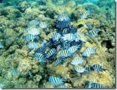praia-da-sepultura-peixinhos
