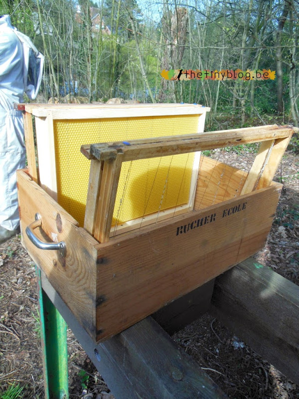 Apiary School in the Anjou Manor