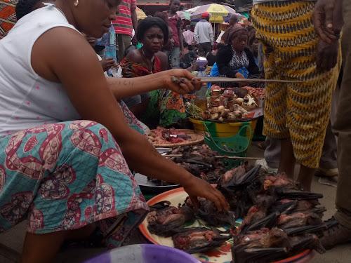 Le marché de Kisangani inondé de chauve-souris, un des réservoirs d'Ebola