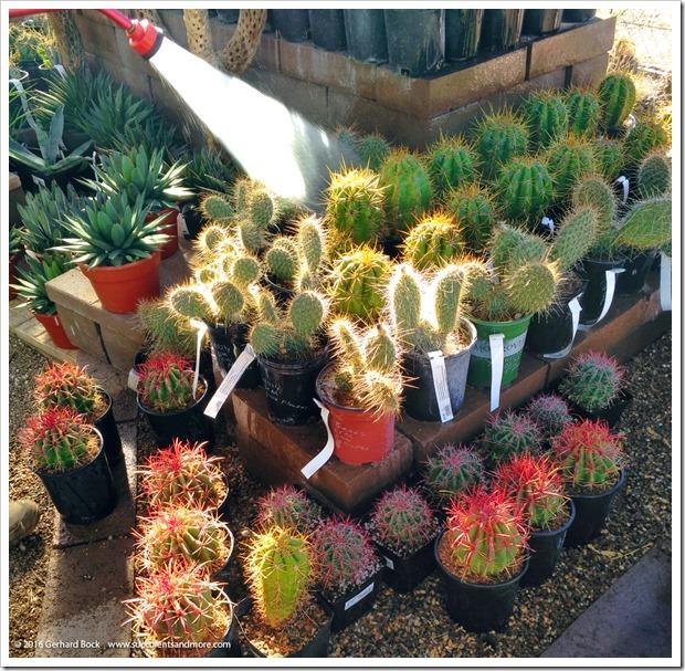 151230_Tucson_Mesquite-Valley-Growers_0055