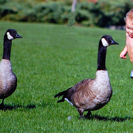 Baby and Canada Geese - 2 by Don Mann - Babies & Children Children Candids ( babies, park, canada, canadian, baby, geese, Hope )