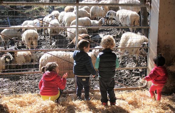 OK Mainada mirant les ovelles.jpg