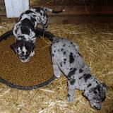 Gretta & Cobalt Blues 3/24/12 litter - SAM_3451.JPG