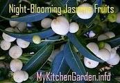 Night-Blooming Jasmine Fruit Berries
