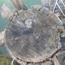 Taborjenje, Lahinja 2006 1.del - IMG_4857.JPG