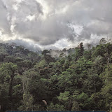 Tangkoko, Sulawesi Nord (Indonésie), 25 août 2014. Photo : T. Boucher