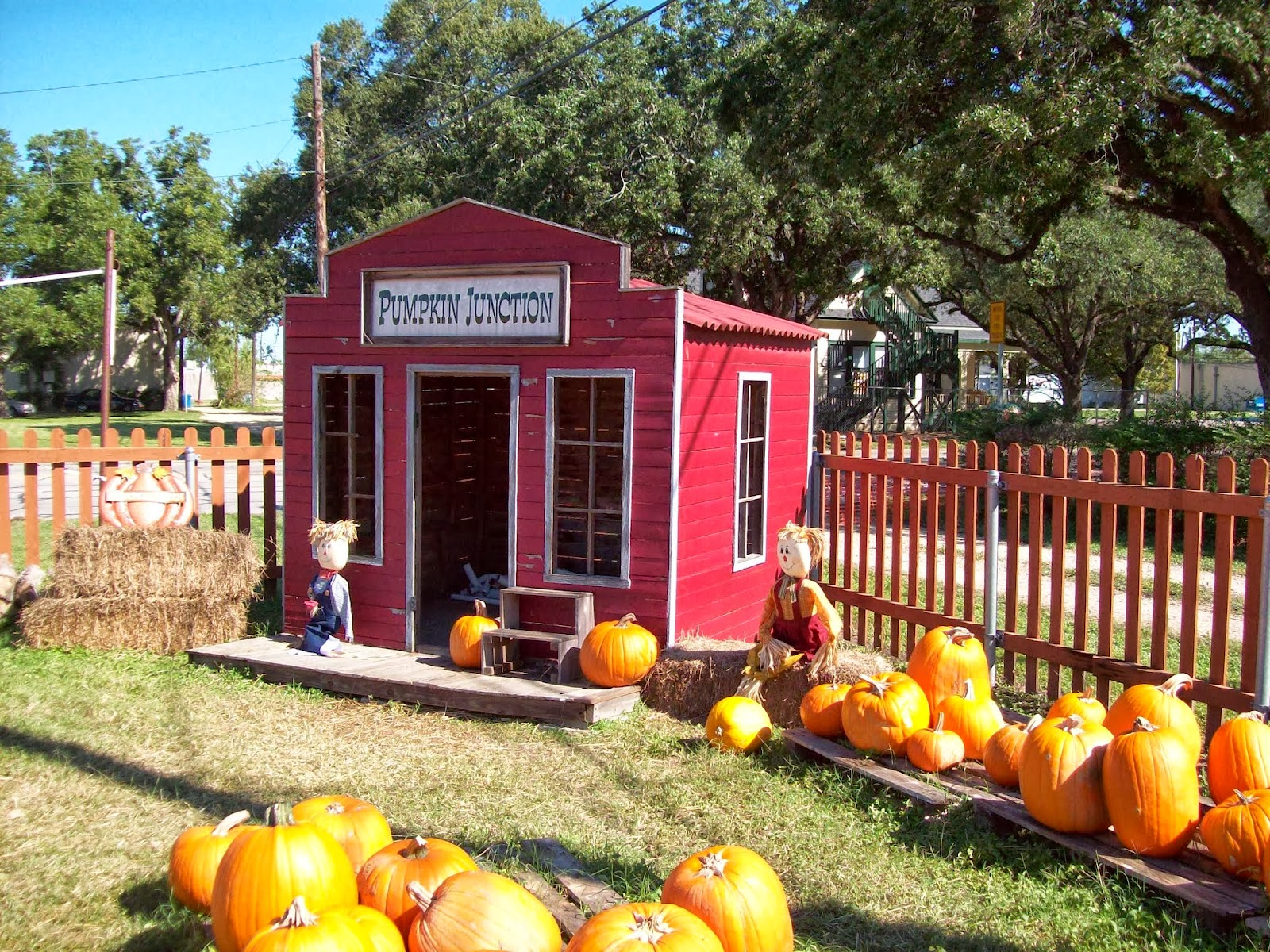 Pumpkin Patch - 114_6534.JPG