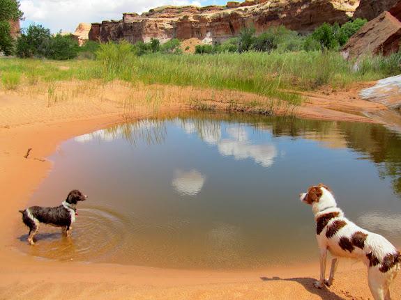 Boulder and Torrey at a big pool