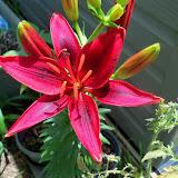 Gardening 2014 - 116_2974.JPG