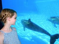 Delfin + Ida
