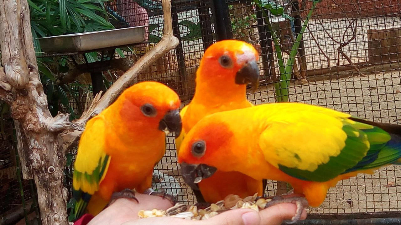 maharani zoo and goa