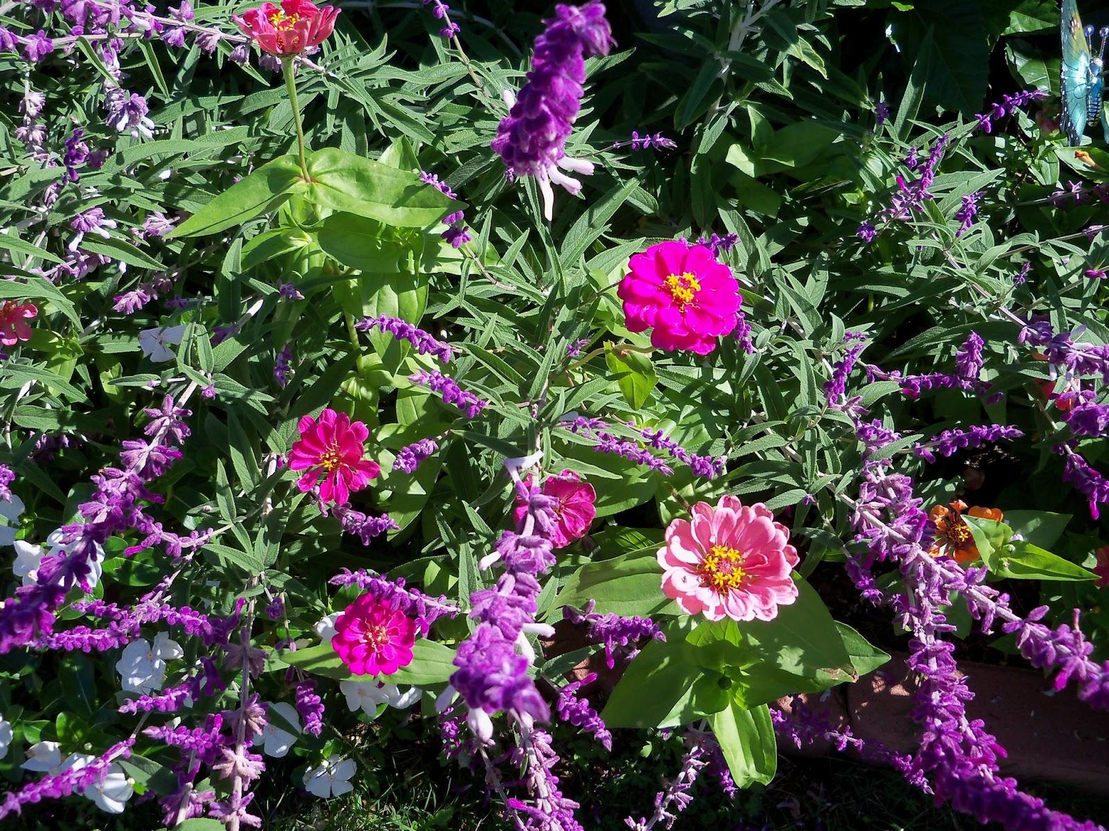 Gardening 2012 - 115_1539.JPG