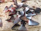 Shark fins for export