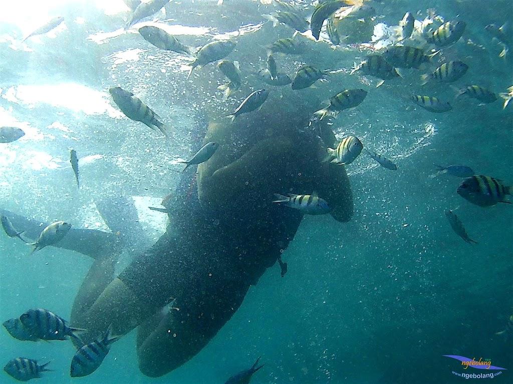 pulau harapan, 6-7 juni 2015 gopro 007