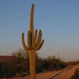 AZ: Phil Miller in Tucson 3/17-19/04