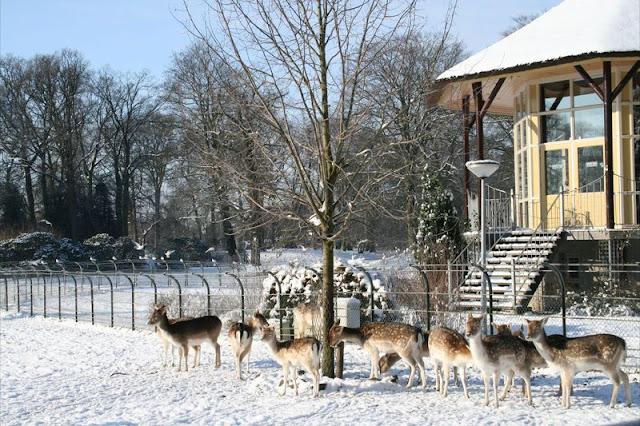 Winterkiekjes Servicetv - Ingezonden%2Bwinterfoto%2527s%2B2011-2012_29.jpg