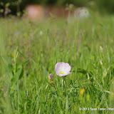 2013 Spring Flora & Fauna - IMGP6321.JPG