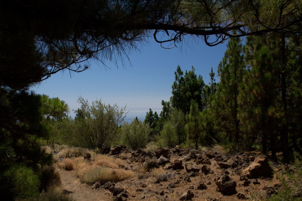 Teneriffa2011-045.jpg