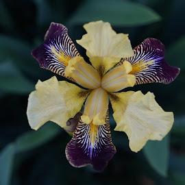 by Marie Schmidt - Flowers Single Flower