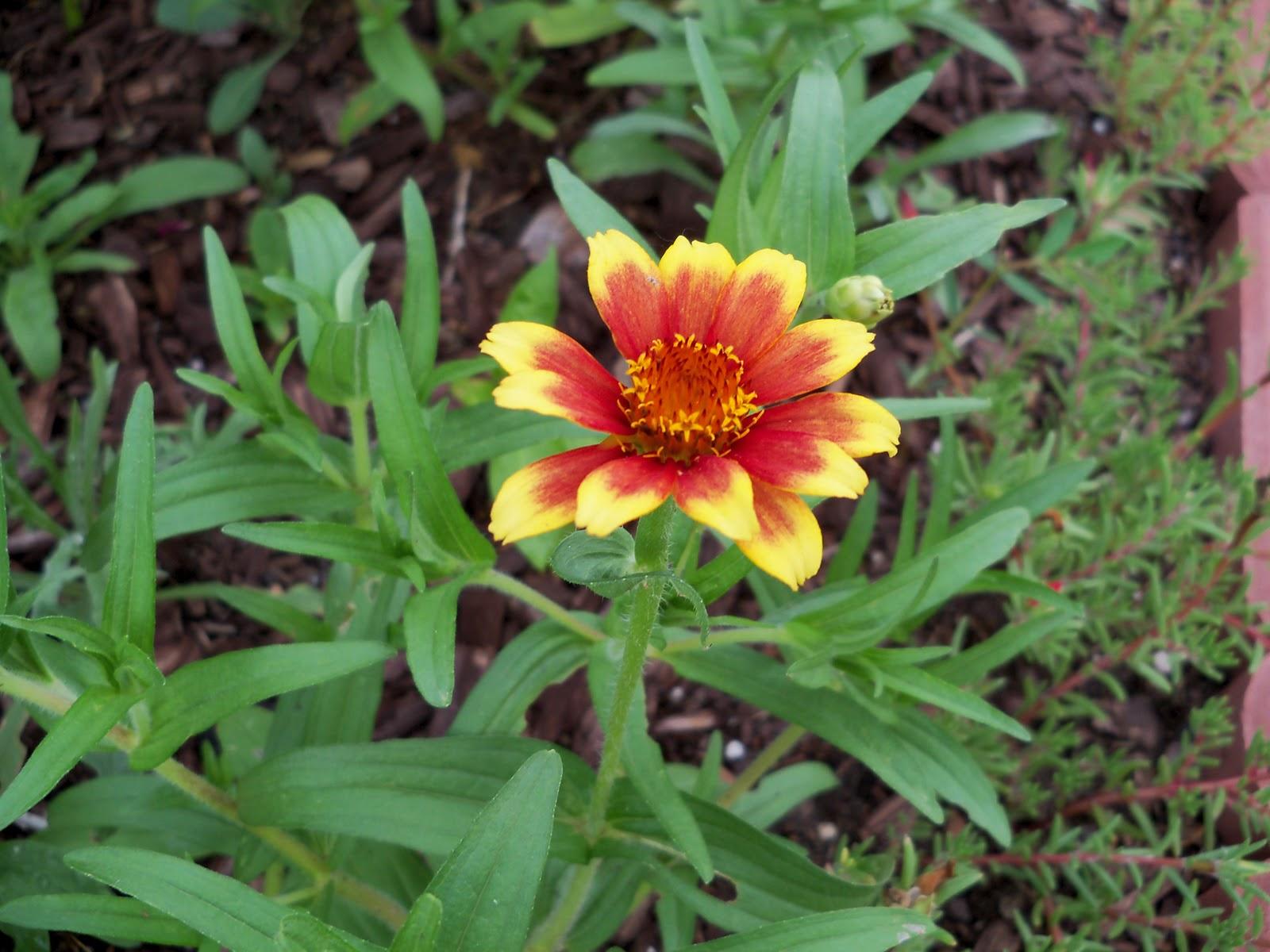 Gardening 2010, Part Two - 101_2438.JPG
