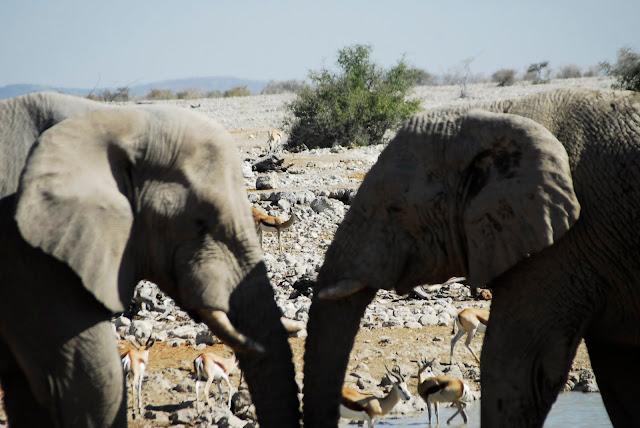 أفضل ما في أفريقيا  Best of Africa Namibia_180807143507