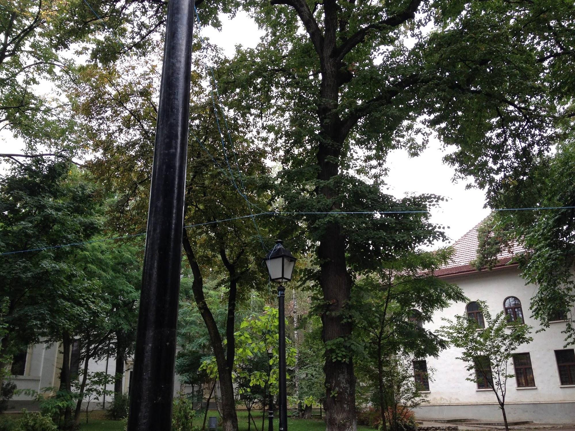 Ţărănoii de la Rotary şi-au lăsat funiile în Parcul Central
